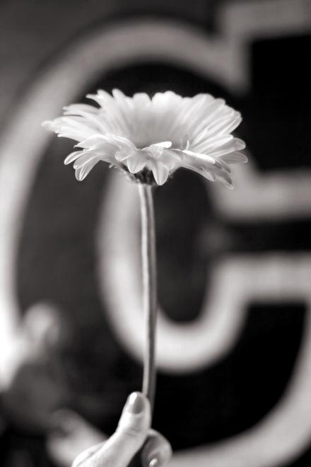 Flower Cargo 01